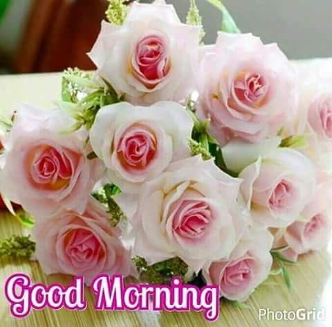 Details in addition Details furthermore Flower Good Morning Whatsapp Images 2017 Truemsg further Details additionally Details. on google navigation app icon